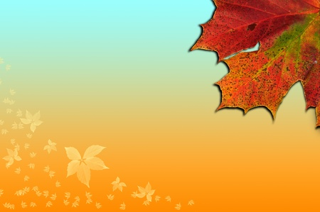 nautral: Colorful Autumn Fall leaves on gradient background