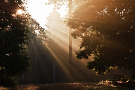 enlightening: Motivational sunbeams through trees in Autumn Fall forest at sunrise Stock Photo