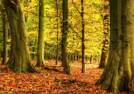 Autumn Fall forest with vivid colors and detail photo