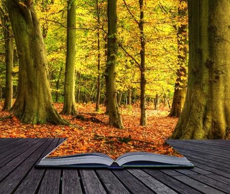 Herbst-Fall Waldlandschaft kommt aus Seiten in magische Buch Lizenzfreie Bilder