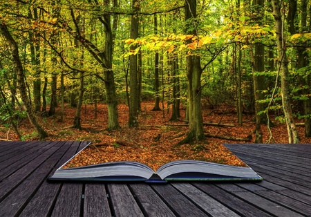 mystical forest: Autumn Fall forest coming out of pages in magic book