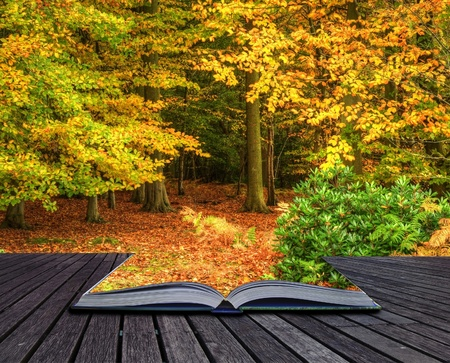 surreal landscape: Autumn Fall forest coming out of pages in magic book