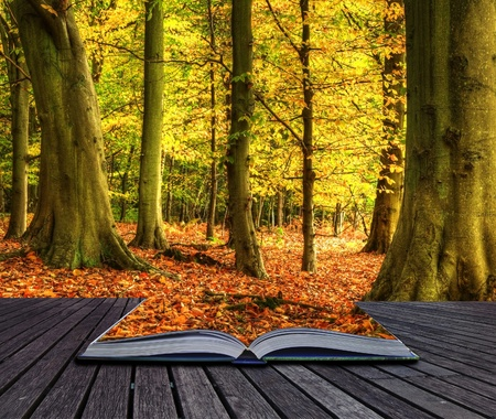 Autumn Fall forest landscape coming out of pages in magic book Stock Photo - 11178939