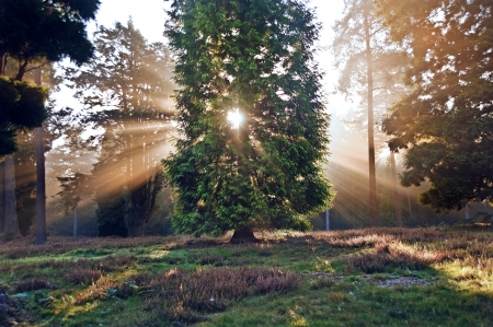 Motivational sunbeams through trees in Autumn Fall forest at sunrise Banco de Imagens