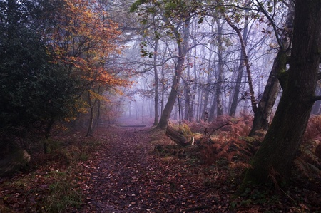 mystical forest: Beautiful forest landscape of foggy misty forest in Autumn Fall