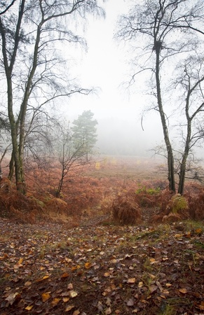 dreary: Beautiful forest landscape of foggy misty forest in Autumn Fall