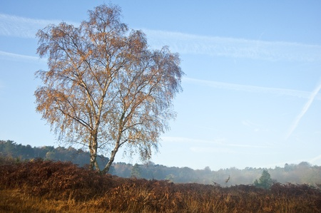 dank: Beautiful forest landscape of foggy misty forest in Autumn Fall