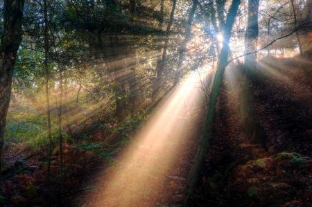 Wundersch�nen Waldlandschaft von nebligen nebligen Wald im Herbst fallen mit hellen Sonnenstrahlen