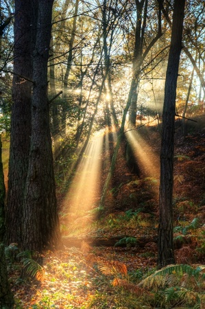 Beautiful forest landscape of foggy misty forest in Autumn Fall with bright sunbeams photo