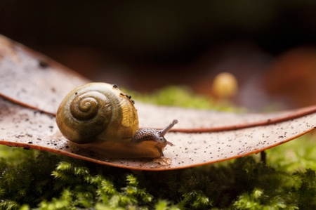 mollusc: Shallow depth of field used to focus attention on common garden snail macro