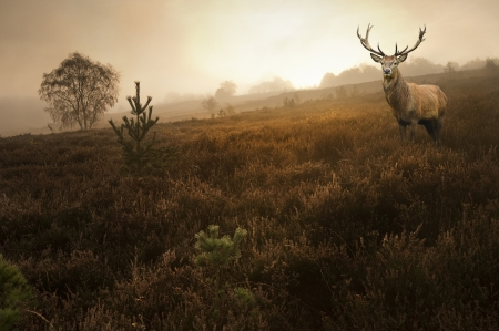 dreary: Beautiful forest landscape of foggy misty forest in Autumn Fall with beautiful red deer stag Stock Photo