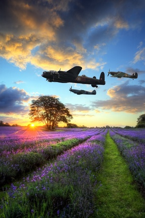 Beautiful image of stunning sunset with atmospheric clouds and sky over vibrant ripe lavender fields in English countryside landscape with World War 2 RAF airplanes flying overhead