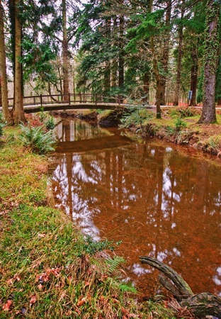 Winter Autumn Fall forest scene with bridge over reflective stream photo