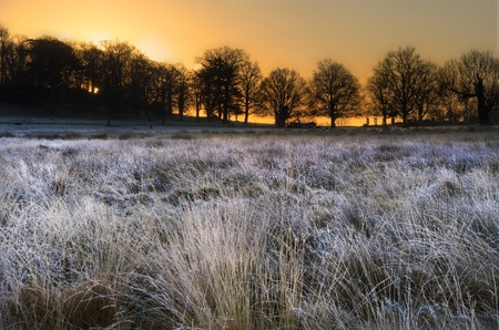 Beautiful Winter landscape across frosty fields towards silhouette trees on horizon into stunning colorful sunrise photo