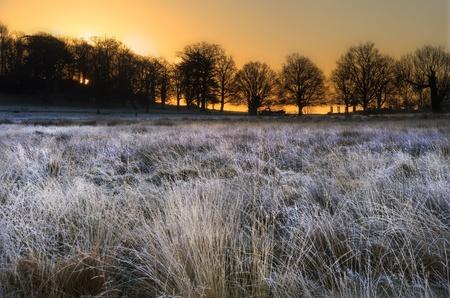 Beautiful Winter landscape across frosty fields towards silhouette trees on horizon into stunning colorful sunrise photo