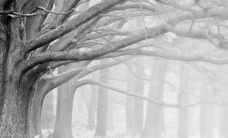 Landscape of forest in fog during Winter Autumn Fall in black and white photo