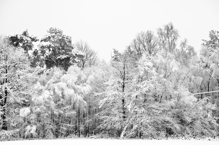 bleak: Beautiful landscape of glistening frost and snow covered trees Stock Photo
