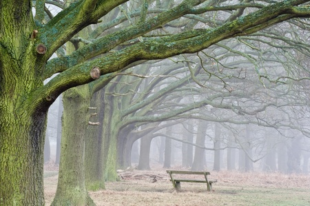 Landscape of forest in fog during Winter Autumn Fall Stock Photo - 12651210