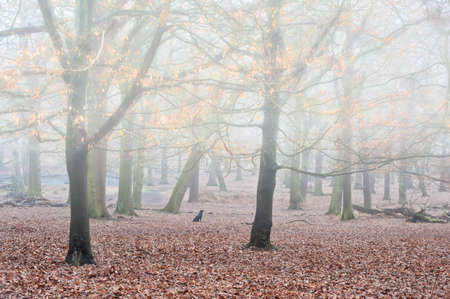 Landscape of forest in fog during Winter Autumn Fall with golden leaves shimmering in mist photo