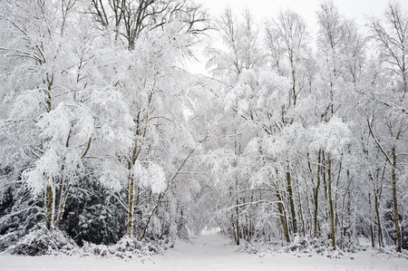 Beautiful landscape of glistening frost and snow covered trees photo