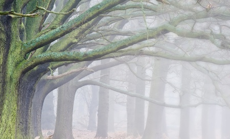 Landscape of forest in fog during Winter Autumn Fall photo