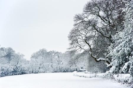 イギリスの田舎での冬の雪風景