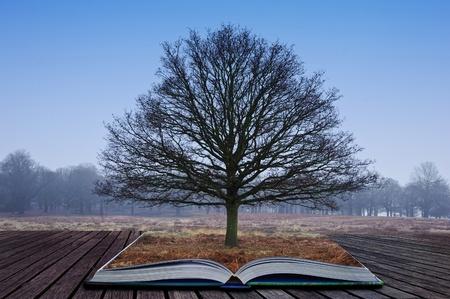 魔法の本のページから育つ単一裸木 写真素材