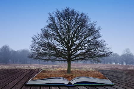 Single bare tree grows out of pages in magical book photo