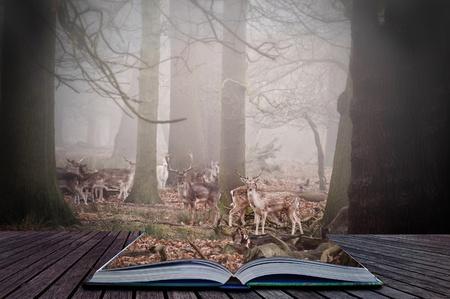 Scene in magic book of fallow deer grazing in foggy forest
