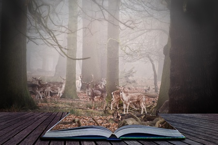 Scene in magic book of fallow deer grazing in foggy forest