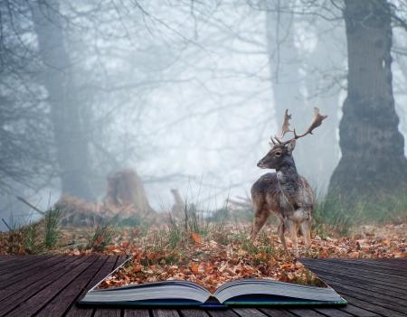 Landschap van bos in mist tijdens de winter Herfst Herfst met damherten roamingin pagina's van magische boek Stockfoto