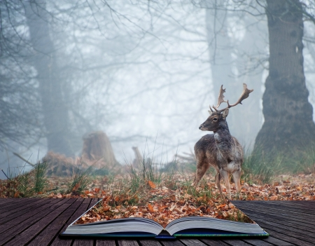 Landscape of forest in fog during Winter Autumn Fall with fallow deer roamingin pages of magical book Foto de archivo