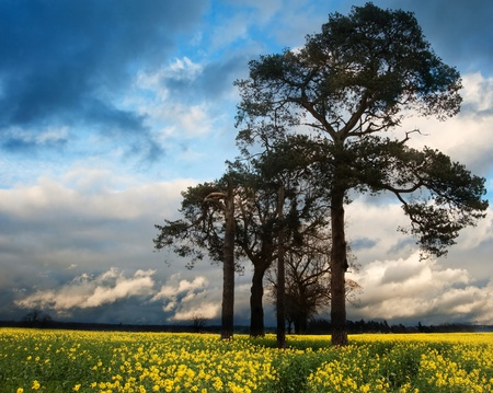 Landscape at sunset of rapeseed field with moody stormy sky overhead Stock Photo - 13286640