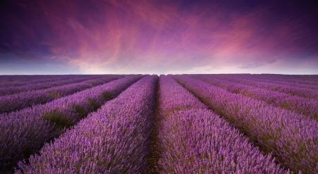 Mooi beeld van lavendel veld Zomer zonsondergang landschap Stockfoto