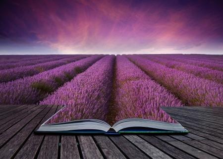 ブック内のページから出てくるラベンダー フィールド風景の想像力に富むイメージ
