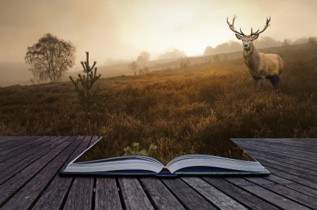 Creative concept image of red deer stag in foggy landscape coming out of pages in book