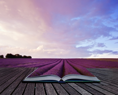 Creative composite image of Summer lavender landscape in pages of magic book 版權商用圖片