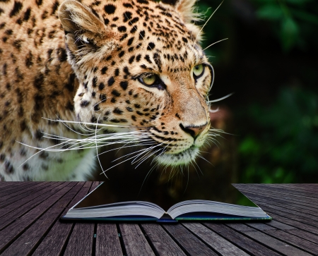 Creative composite image of leopard in pages of magic book Stock Photo - 14929161