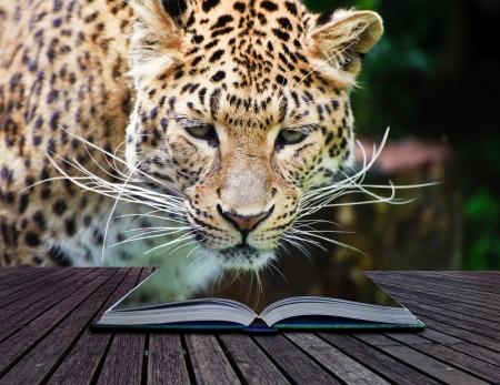 Creatieve samengesteld beeld van luipaard in pagina's van magische boek