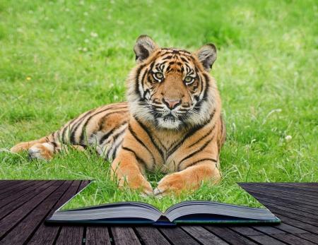 Creatieve samengesteld beeld van tijger in pagina's van magische boek