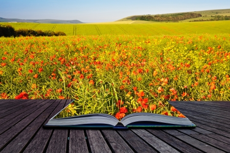 Creative composite image of Summer landscape in pages of magic book