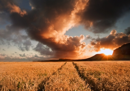 Landscape of golden field of wheat under a dramatic stormy looking sky in Summer Stock Photo - 14929035