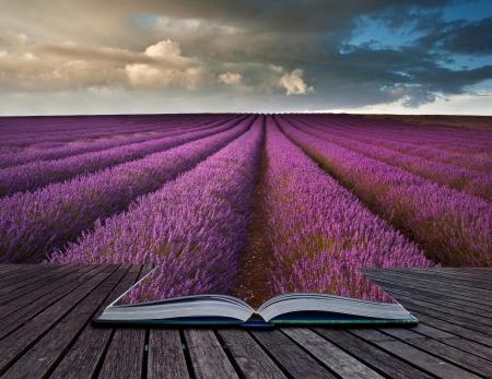 Creative composite image of Summer lavender landscape in pages of magic book Foto de archivo