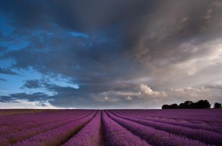 Mooi landschap van lavendelvelden bij zonsondergang met dramatische hemel Stockfoto