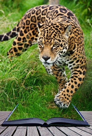 Creative composite image of jaguar in pages of magic book