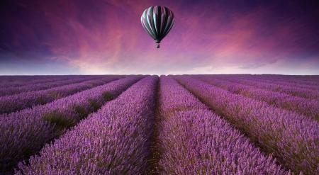 ラベンダーのフィールド夏、熱気球で日没の風景の美しい画像