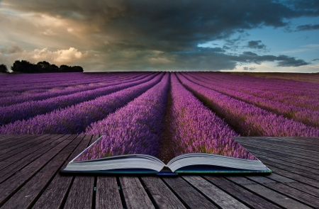 sunlgiht: Creative composite image of Summer lavender landscape in pages of magic book Stock Photo