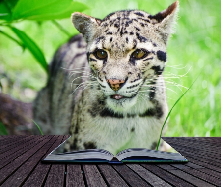 Creative image of clouded leopard in pages of magic book photo