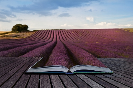 Creative composite image of Summer lavender landscape in pages of magic book photo