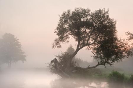 Landscape viiew across foggy river at sunrise photo